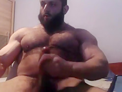 Bear hairy muscle Galleries