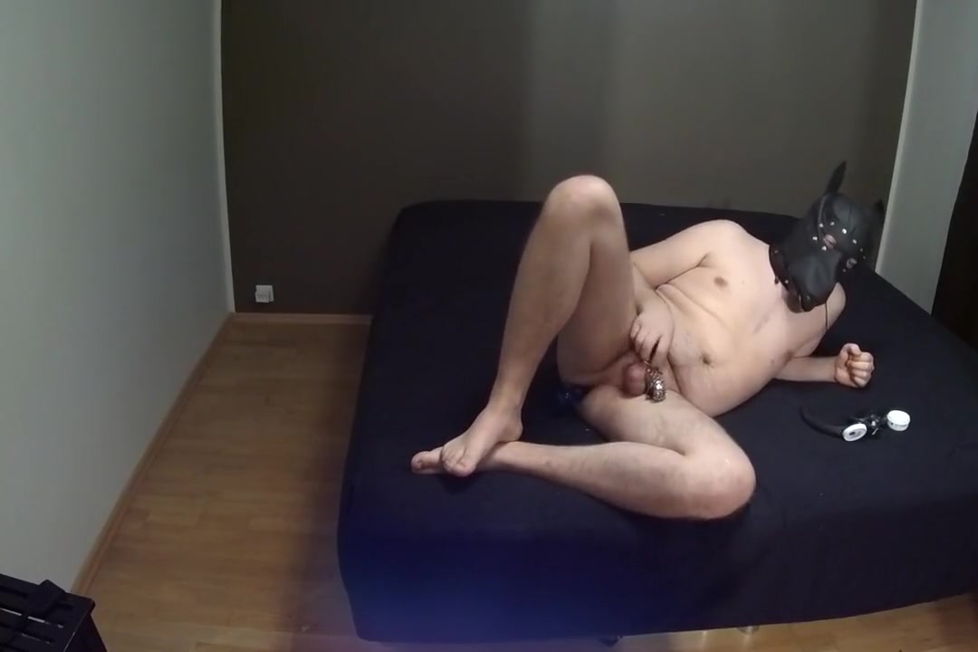 Pet left alone home A Quicky Sex