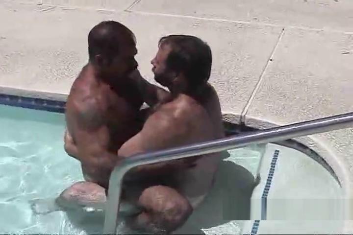 Husky bears kiss in pool Swinging in london